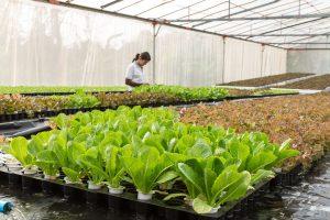 biotechnology sectors
