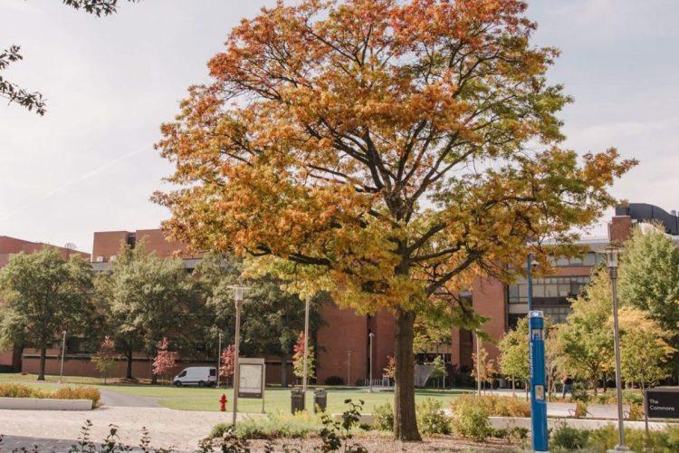 UMBC Campus
